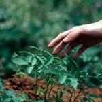 10 dicas sustentáveis para transformar sua rotina